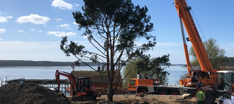 Großbaumpflanzung